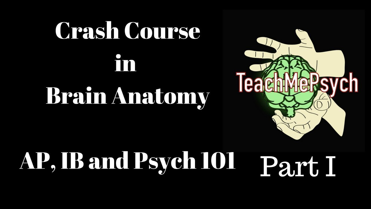 Brain Anatomy for Psych 101, AP Psych and IB Psych (Part I) - YouTube