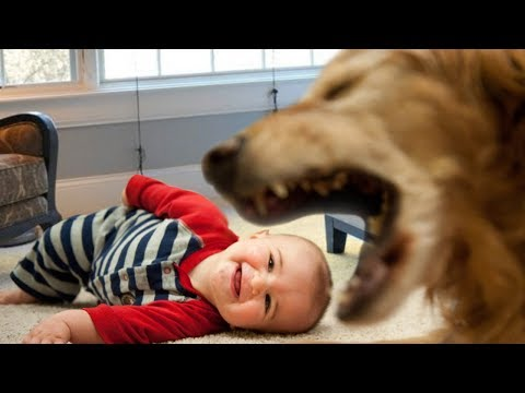 Cute Dog Trying to Talk to Baby Compilation NEW