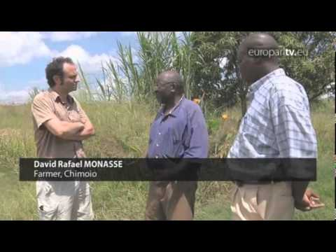 Reporter: The rise of biofuels and land grabbing