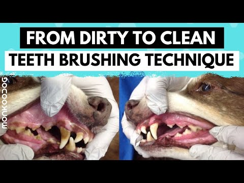 How To Clean Your Dog's Teeth At HOME In Simple Steps. L Dog Grooming Tips L