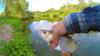 Рыбалка на реке ловля голавлей плотвы и красноперки июнь 2021 поплавок