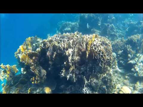 Best Snorkeling in the World - Roatan's Meso-American Reef System