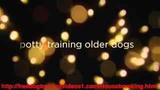 Best Older Dog Training Program - Potty Training Older Dogs