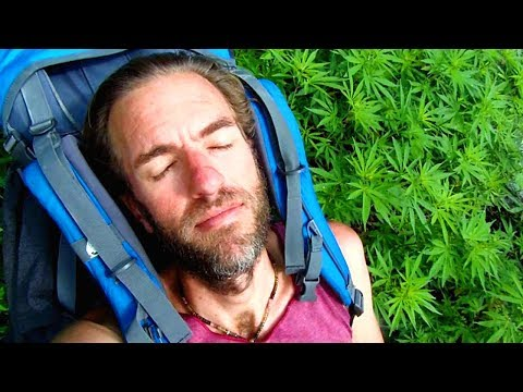 I Woke Up in a Field of Wild Marijuana