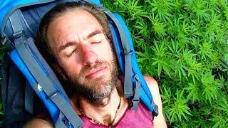 Where Does Marijuana Grow Wild? Here's Where!! | Gabriel Traveler