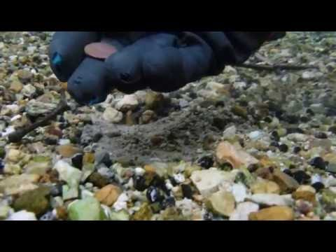 Metal Detecting: Calf Deep in the Water Somewhere