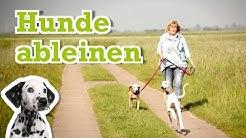 Hund Gassi gehen ohne Leine Freilauf üben - Hunde Ableinen - Hundeerziehung Anleitung