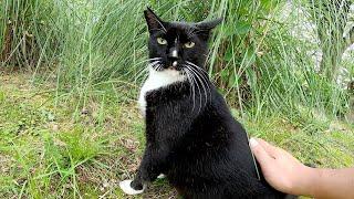 【バットニャン】ほぼ黒毛のハチワレ猫、茶シロ猫にビビって逃げてしまう