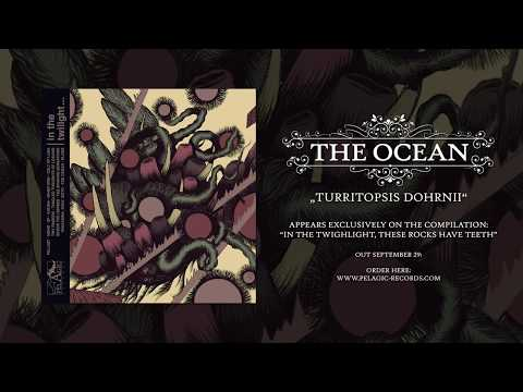 THE OCEAN - Turritopsis Dohrnii