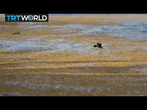Indonesia Seaweed: Farmers grow crop to help reduce marine waste