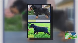 Family Says They Got Wrong Dog From Rottweiler Breeder