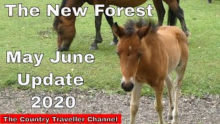 The New Forest Update in May and June 2020  #thenewforest #thecountrytraveller #newforestponies