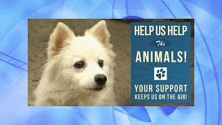Animal Show Social Media Promo Video