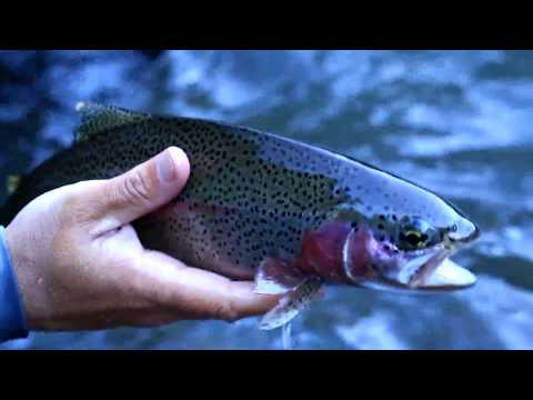 McCloud River Fly Fishing Guide - AC Fly Fishing