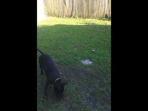Dog That Hops Like A Bunny