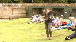 Show involving birds of prey - Falconry / Sokolnictwo The Falcons of Thorp Perrow