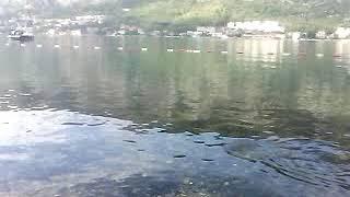 Серая утка рыбачит на городском пляже в Которе