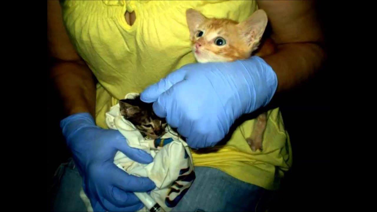 Resultado de imagem para familias de acolhimento temporario gatos