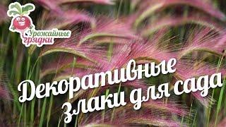 видео Декоративные злаки и травы в дизайне сада