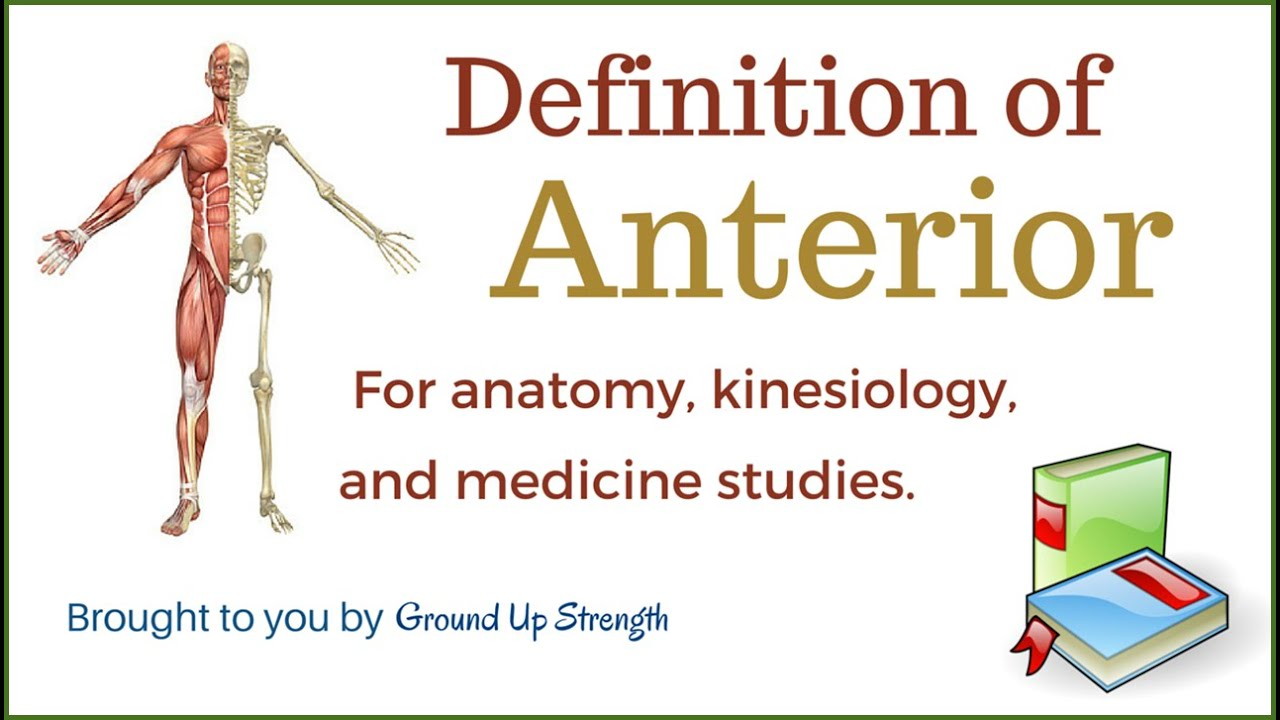 What is anterior in anatomy