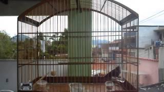 Tiziu  Tiroteio do Maikin de Campo Grande
