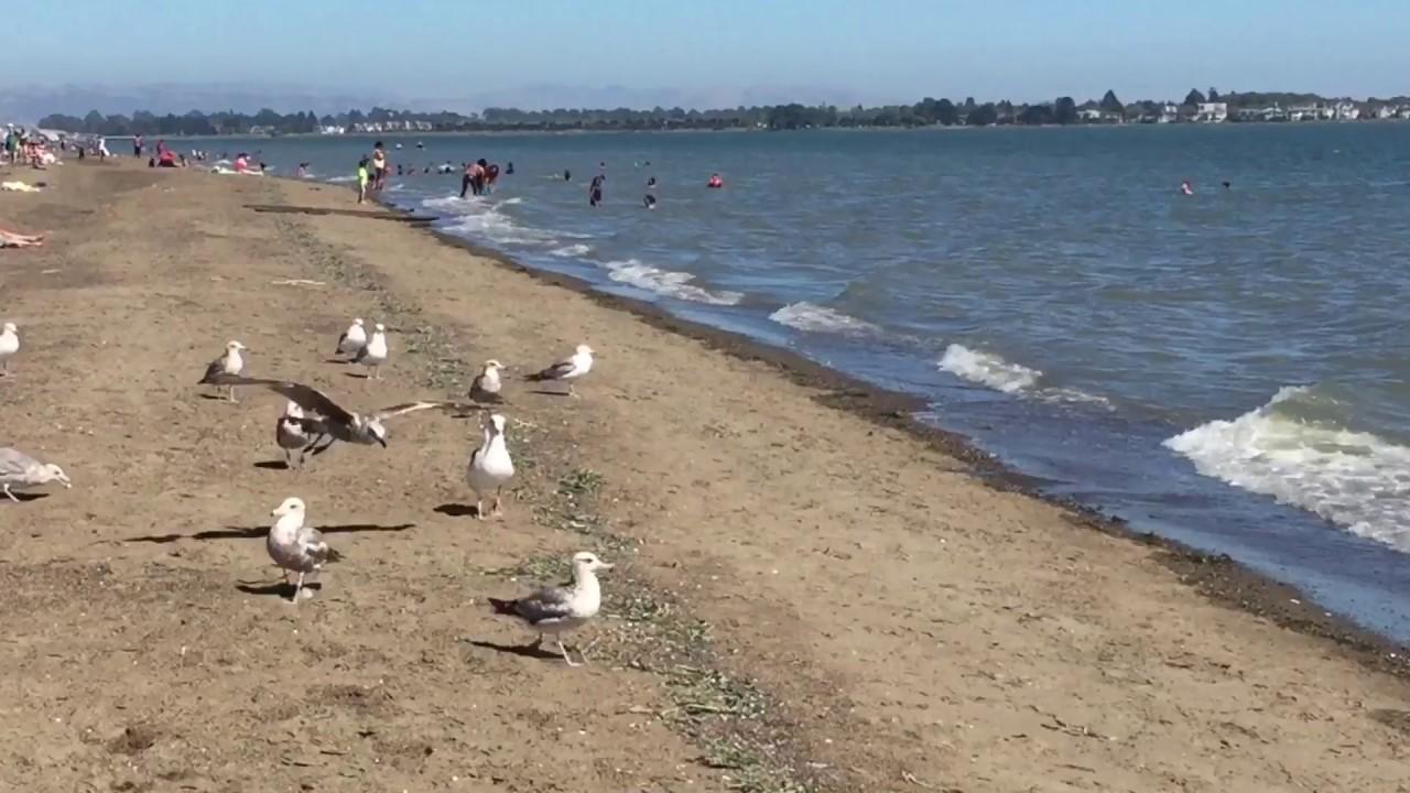 Crown Memorial State Beach Alameda Ca