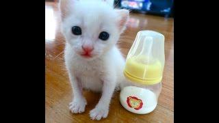Bottlefeeding abandoned newborn kittens / cute kittens , Kitten Formula , funny cat