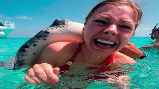 10 Most Dangerous Ocean Creatures