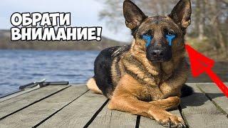 Социальный ролик о  дружбе животных . До слез . Смотреть всем!