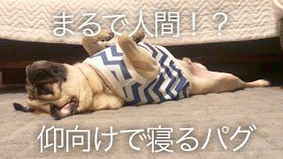 無防備にお腹丸出しで寝てるだけの動画 instagramもやってます✨ instagr...