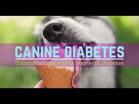 symptoms-of-diabetes-in-dogs---signs-of-diabetes-in-dogs