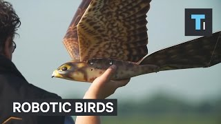 These robotic birds are like scarecrows in the sky