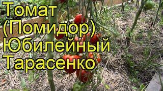 видео Томат «Малахитовая шкатулка», характеристика сорта, описание особенностей выращивания и урожая