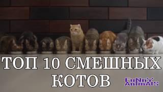 Топ 10 самых смешных котов | СМЕШНО ДО СЛЁЗ 2016 | Funny cats compilation 2016
