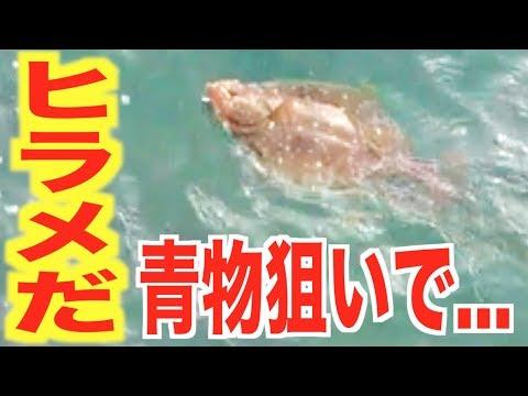 ライトショアジギングで予定外の魚がキタ!!