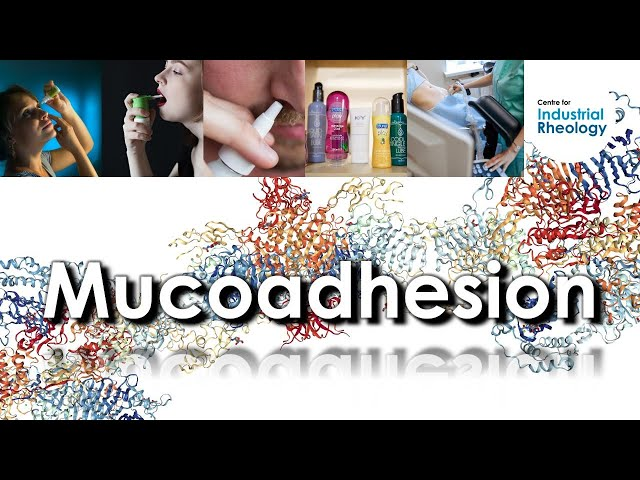 Mucoadhesion - Investigating rheological synergism of mucoadhesive polymers