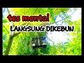 Tes Mental Prenjak Merah Trek Di Alam  Mp3 - Mp4 Download