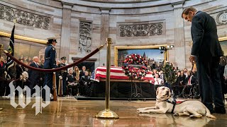 Bush's service dog Sully visits his coffin at the Capitol