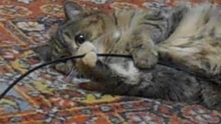 Кошка Ромашка - собственница!