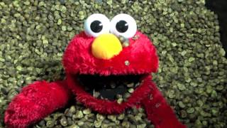 Elmo Being Tickled By 100,000 Mexican Jumping Beans!