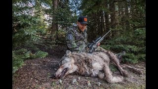 HUNTING BEARS & WOLVES IN IDAHO