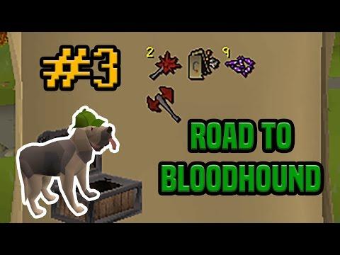 Road To Bloodhound - Episode #3