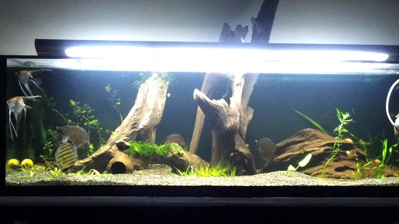 Aquario 300 litros amazon fish tank 68 79 gallon for Amazon fish tank