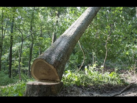 Forest Management And Timber Procurement