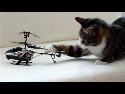 Cat vs RC Helicopter - 猫対ヘリコプター