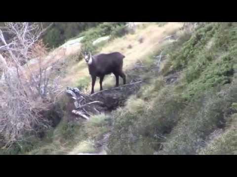 Novembre 2014, caccia al camoscio in Valtellina