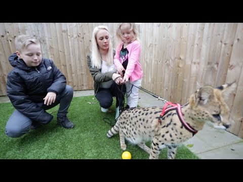 Family Live With African Wild Cat