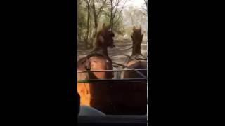 Horse drawn tram through Soest's woodlands