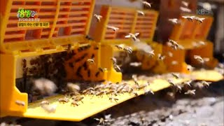 꿀벌이 주는 선물! 벌 화분 [2TV 생생정보] 202…