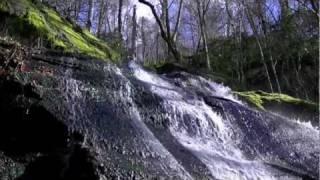 fern branch falls porters creek trail great smoky mountains np